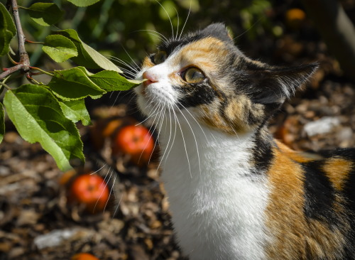Tříbarevná kočičí holka (hledáme jméno)